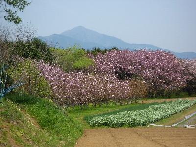 f:id:sasameyuki47:20100426125032j:image