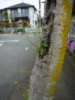 f:id:sasameyuki47:20100510111812j:image