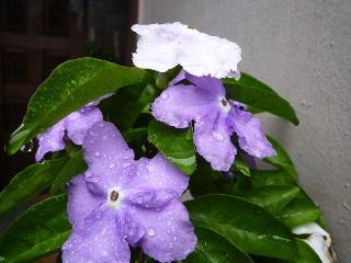 f:id:sasameyuki47:20100520081845j:image
