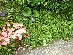 f:id:sasameyuki47:20100621151203j:image