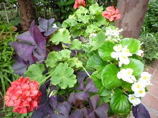 f:id:sasameyuki47:20100909082648j:image