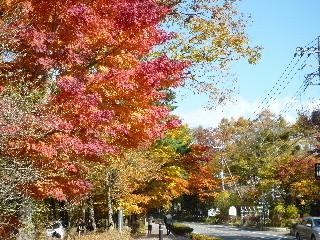 f:id:sasameyuki47:20101108114051j:image