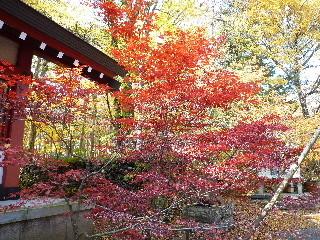 f:id:sasameyuki47:20101108124311j:image