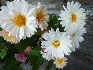 f:id:sasameyuki47:20101111144608j:image