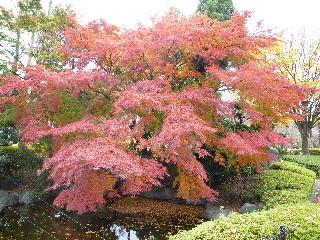 f:id:sasameyuki47:20101123142518j:image