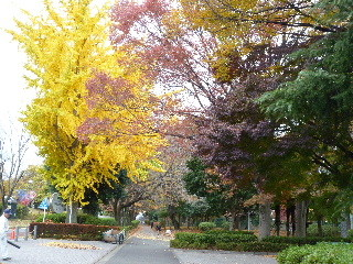 f:id:sasameyuki47:20101123143318j:image