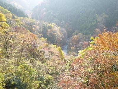 f:id:sasameyuki47:20101125134528j:image