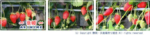 f:id:sasameyuki47:20110112005709j:image