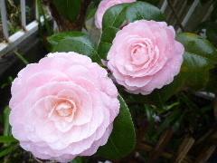 f:id:sasameyuki47:20110409145905j:image