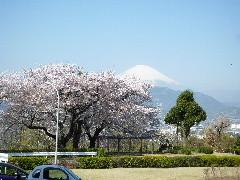 f:id:sasameyuki47:20110413092316j:image