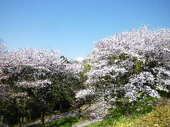 f:id:sasameyuki47:20110413093637j:image