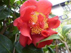 f:id:sasameyuki47:20110421155230j:image