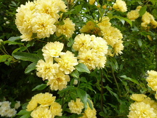 f:id:sasameyuki47:20110503102257j:image