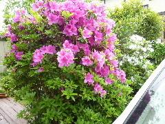 f:id:sasameyuki47:20110503102441j:image