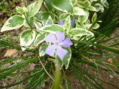 f:id:sasameyuki47:20110503112056j:image