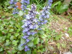 f:id:sasameyuki47:20110503112107j:image