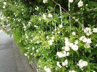 f:id:sasameyuki47:20110505120238j:image