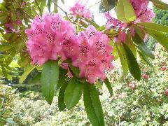 f:id:sasameyuki47:20110520095548j:image