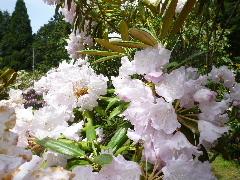 f:id:sasameyuki47:20110520095754j:image