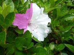 f:id:sasameyuki47:20110601153433j:image