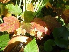 f:id:sasameyuki47:20111130100211j:image