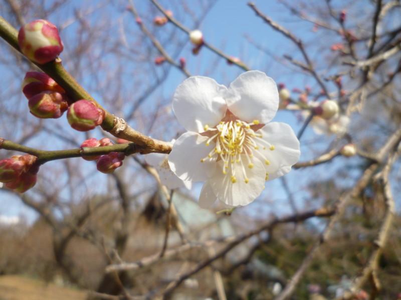 f:id:sasameyuki47:20120210111548j:image:w360