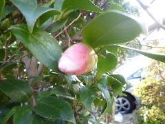 f:id:sasameyuki47:20120321162022j:image