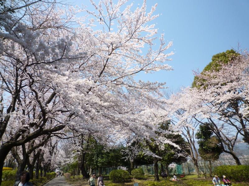 f:id:sasameyuki47:20120409115626j:image:w360