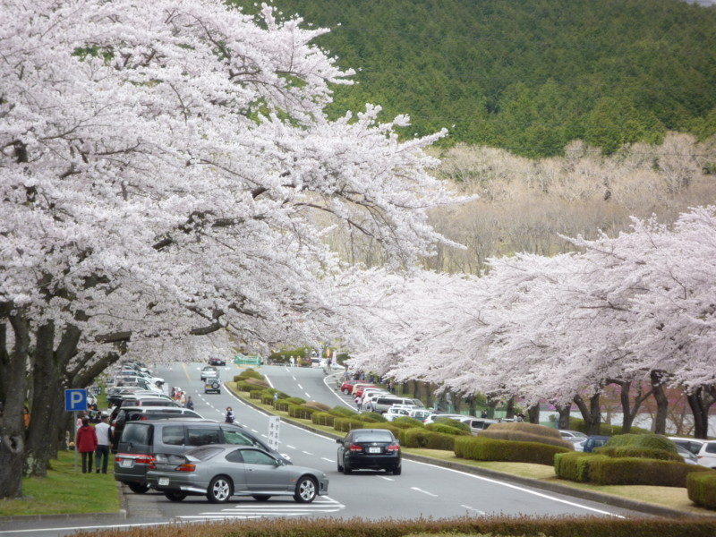 f:id:sasameyuki47:20120424111954j:image:w360