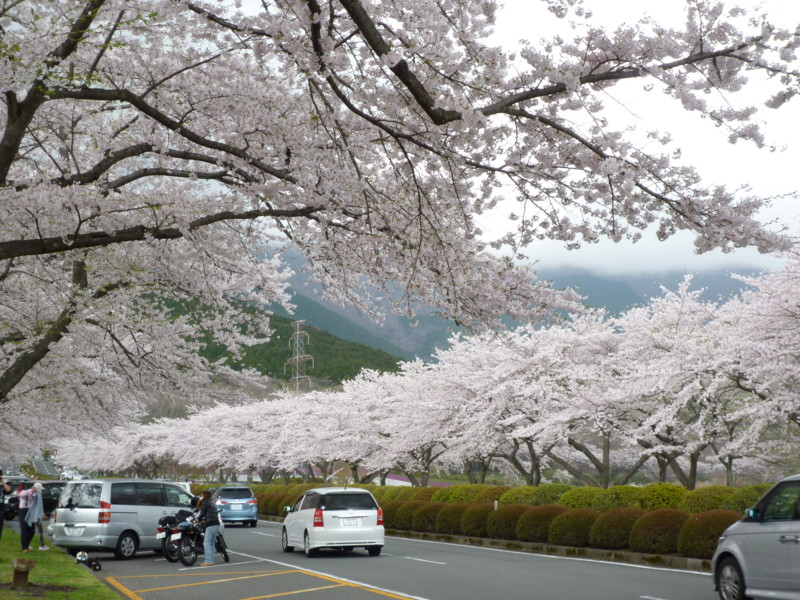 f:id:sasameyuki47:20120424113841j:image:w360:right