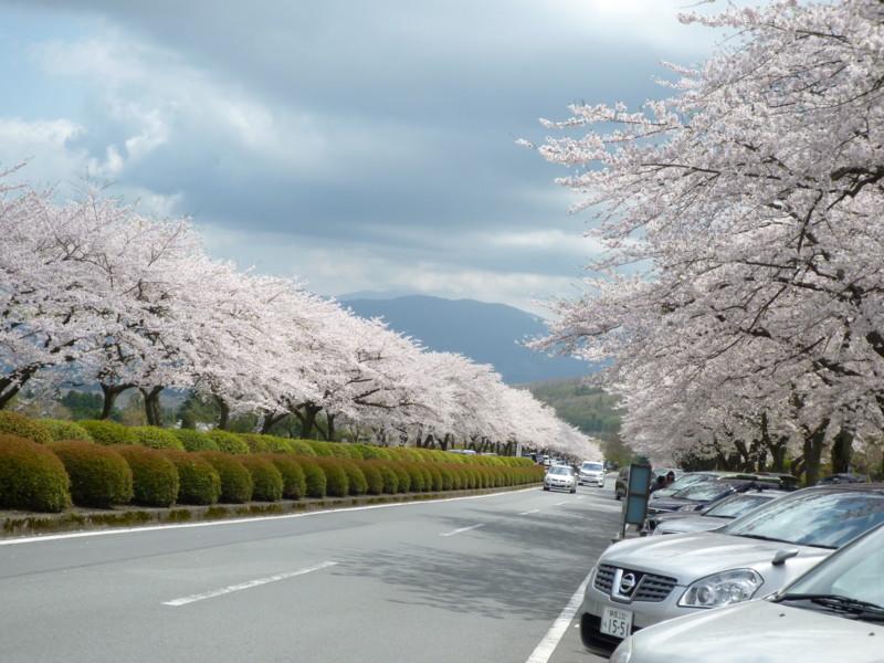f:id:sasameyuki47:20120424121258j:image:w360:left