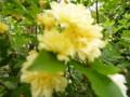 f:id:sasameyuki47:20120509090838j:image:medium:left