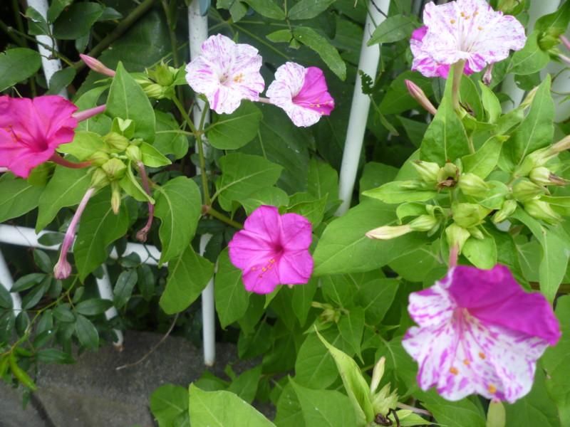 f:id:sasameyuki47:20120817164323j:image:w360