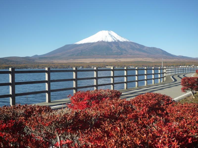 f:id:sasameyuki47:20121108073300j:image:w360