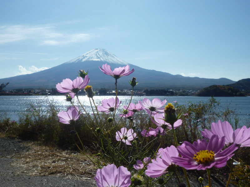 f:id:sasameyuki47:20121108112850j:image:w640