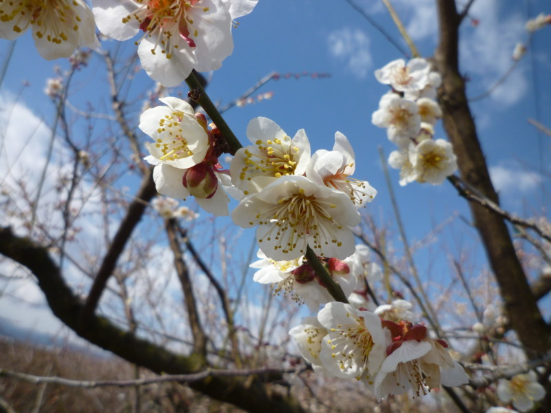 f:id:sasameyuki47:20130221112716j:image:w640
