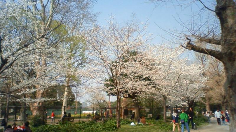 f:id:sasameyuki47:20130324143100j:image:w360