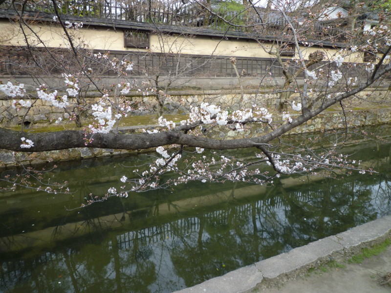 f:id:sasameyuki47:20130326155646j:image:w360