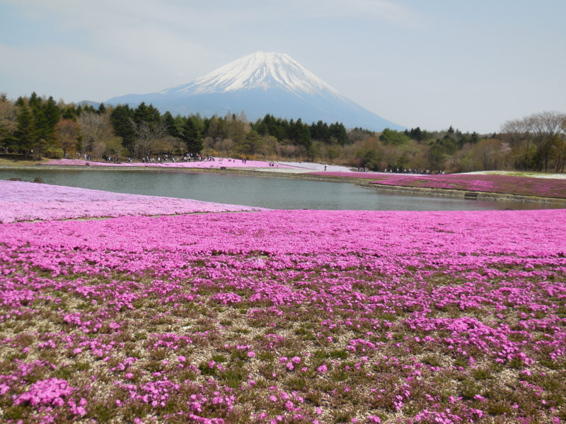 f:id:sasameyuki47:20130429132453j:image:w640