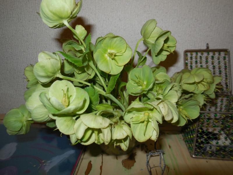 f:id:sasameyuki47:20130502131942j:image:w360:right