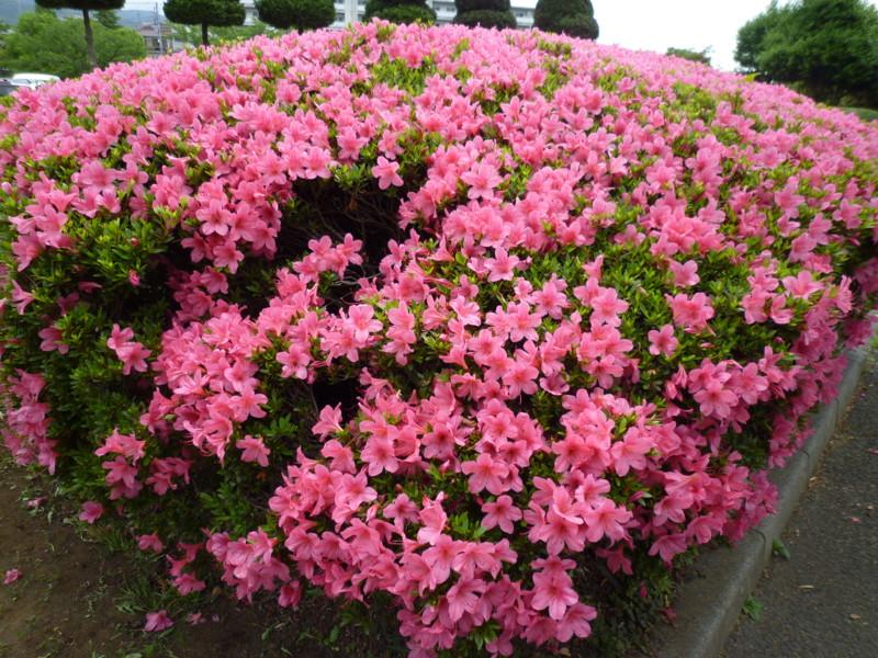 f:id:sasameyuki47:20130529105920j:image:w360