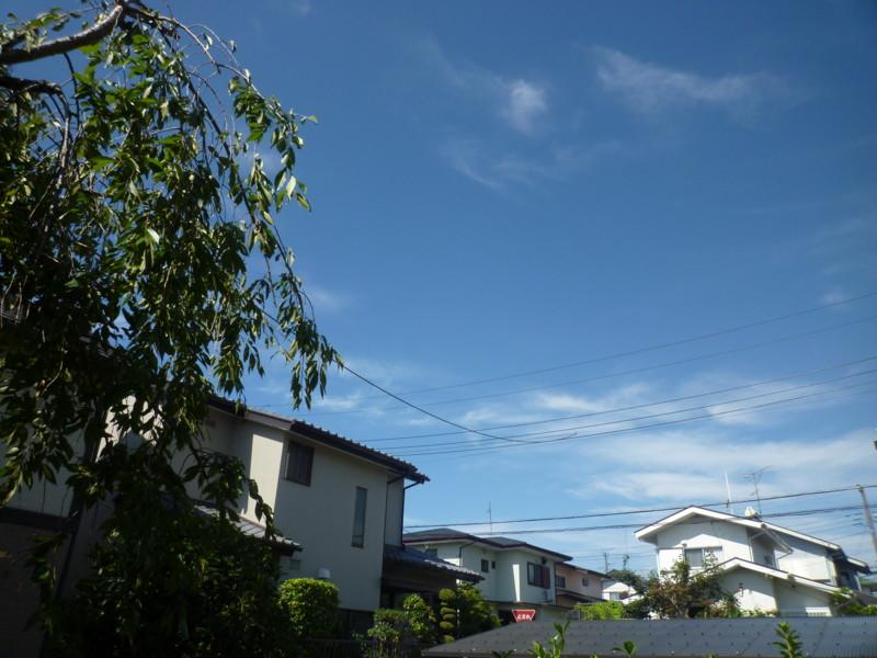 f:id:sasameyuki47:20130901090755j:image:w360