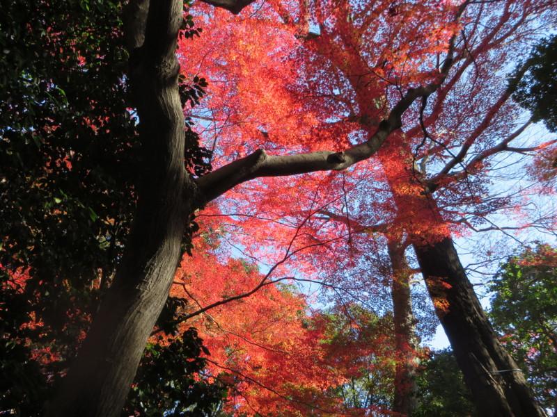 f:id:sasameyuki47:20131129134152j:image:w640