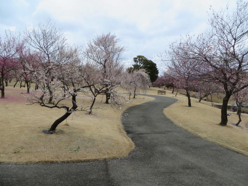 f:id:sasameyuki47:20140303122828j:image:w360