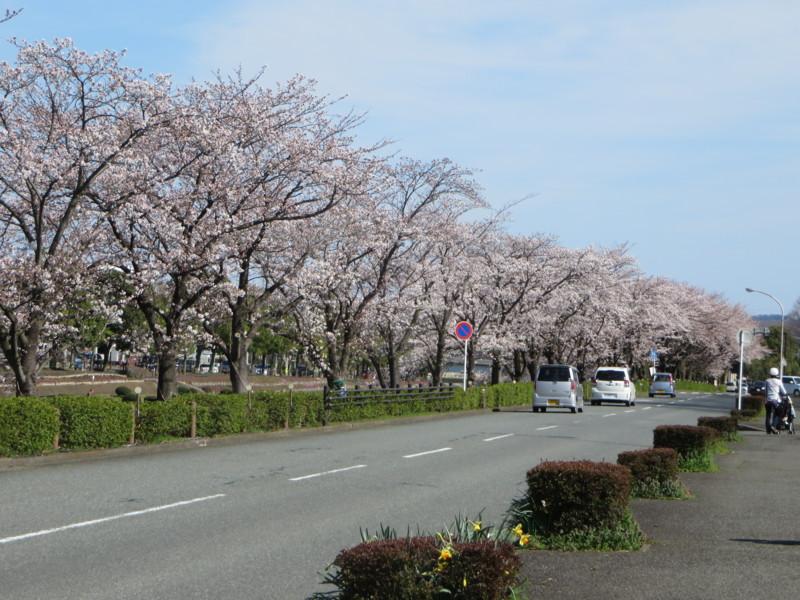 f:id:sasameyuki47:20140331142509j:image:w360