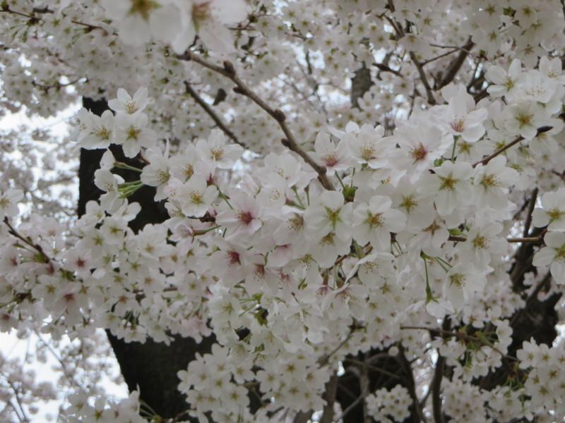 f:id:sasameyuki47:20140402163908j:image:w360