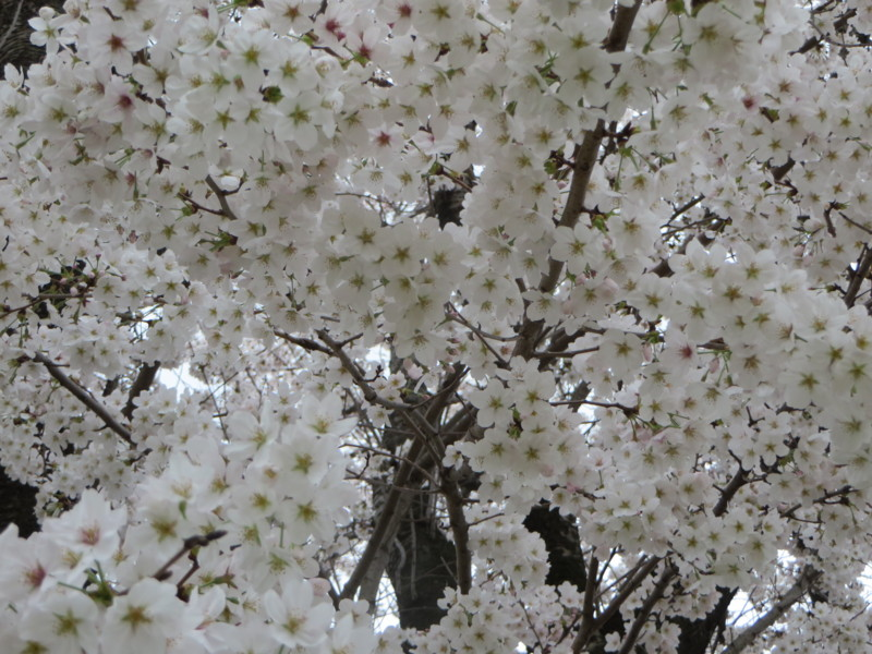 f:id:sasameyuki47:20140402163914j:image:w640