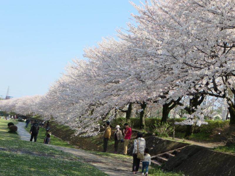 f:id:sasameyuki47:20140404141535j:image:w640
