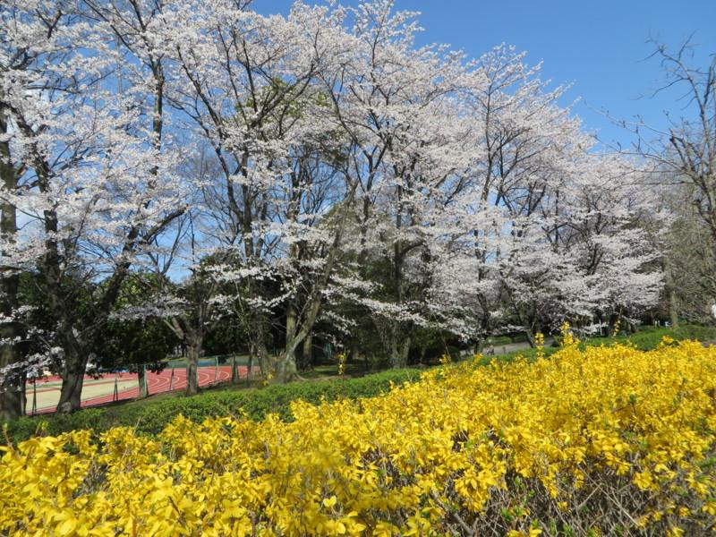 f:id:sasameyuki47:20140404143504j:image:w640