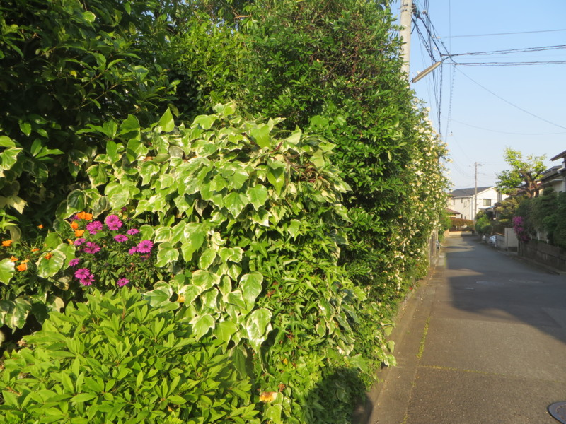 f:id:sasameyuki47:20140510164940j:image:w360